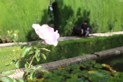 Alhambra 42